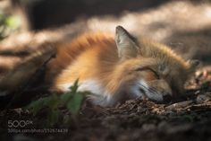 Only in dreams... by friends-of-alfi #animals #animal #pet #pets #animales #animallovers #photooftheday #amazing #picoftheday