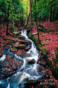 ✯ Chesterfield Gorge - New Hampshire