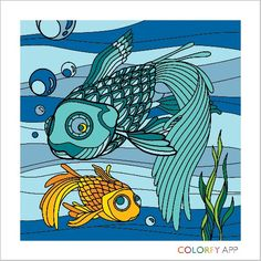 Colorfy fishes