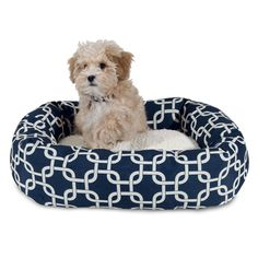 Available Puppies Petland Racine Dogs For Sale Puppies Pet