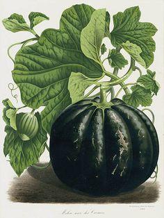 1845 Van Houtte Flores de Serres Fruit Prints