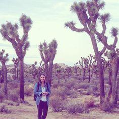 Dr Seuss would be proud of these tree's! #joshuatree #joshuatreenationalpark #nickandrachelsepicroadtrip #california