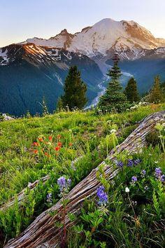 Mount Rainier, United States ...bucket list