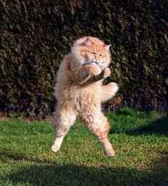 Ma quale balzo felino, il gatto è un ninja