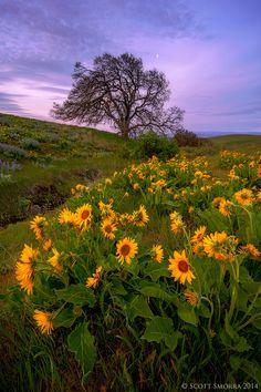 Photo Under the Oak Tree by Scott  Smorra on 500px