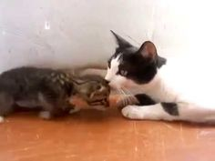 Mama Cat Tells Her Kitten It's Time For Dinner - We Love Cats and Kittens