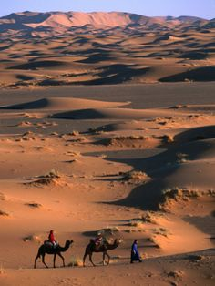 Camel Caravan Crossing Dunes, Erg Chebbi Desert, Morocco @rougehostels http://www.marrakechrougehostels.com/ouarzazate/ http://www.whenevermarrakech.com/ouarzazate/