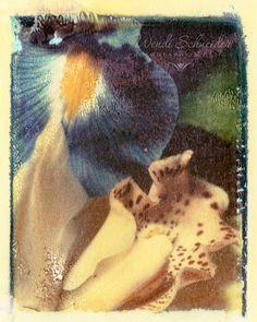Polaroid Transfer Photographs by Wendi Schneider