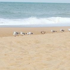 Very Jonathan Livingston Seagull vibe at the beach today. Jonathan Livingston Seagull, Beach, The Beach, Beaches