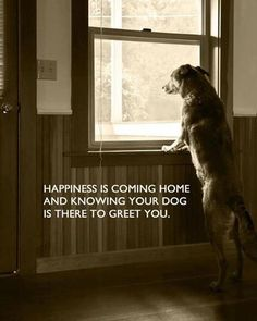 Happiness is a dog at home