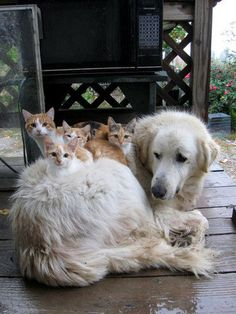 Cats and a very accommodating dog.