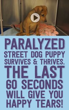 Paralyzed street dog puppy survives & thrives! The last 60 seconds will give you happy tears!