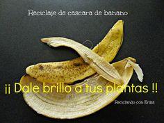 Reciclaje de cascara de banano , para dar brillo a las plantas