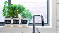 Enjoy Fresh Herbs All Year Long  http://www.rodalesorganiclife.com/home/enjoy-fresh-herbs-all-year-long?cid=soc_Rodale's%2520Organic%2520Life%2520-%2520RodalesOrganicLife_FBPAGE_Rodale's%2520Organic%2520Life__