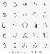 Image result for coloring sheet for separated body parts Coloring Sheets, Body Parts, Album Covers, Stock Photos, Image, Ideas, Colouring Sheets, Parts Of The Body, Thoughts