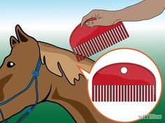 Grooming is very beneficial for horses, not only because it cleans their coat and it adds beauty to their appearance, but also because can promote healthy emotional bonding and trust between the horse and the person. Grooming a horse. Horse Care, Pikachu, Groom, Horses, How To Make, Pictures, Animals, Youth Club, Coconut Oil