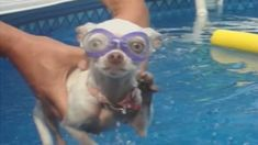 Dogs Love Swimming: Compilation - YouTube