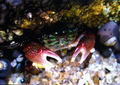 """""""A tad on the crabby side,"""",Pacific Grove, By Camilla Mann"""