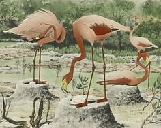 Flamingo Painting - Birds And Trees Of North America by Rex Brasher
