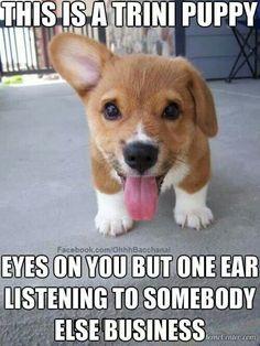 Trini Puppy...lol!