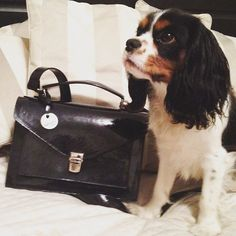 Nelson maniak torebek  #nonou #bags #torebka #zaprojektujtorebkę #learherbag #handmade #polishdesign #fashionlover #workingdog #cavalier #kingcharles #instadog #instapuppy #dogoftheday #puppyoftheday #ilovemydog #doglover #happytogether