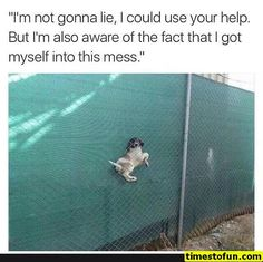 Today we have brought freshly curated funny animal pictures with captions. This is one of the best animal pictures collection. Besides, we have few funny animal memes for you. Hope you will enjoy. Funny Animal Memes, Cute Funny Animals, Funny Animal Pictures, Funny Cute, The Funny, Funny Dogs, Cute Dogs, Funny Memes, Daily Funny