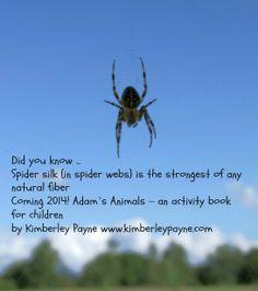 Spider -   Adam's Animals - A children's activity book www.kimberlepayne.com Kids Activity Books, Book Activities, Spider Silk, Did You Know, Children, Animals, Young Children, Boys, Animales