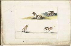 Vier studies van honden, Gesina ter Borch, ca. 1660 - ca. 1680