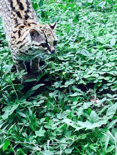 Discover some beautiful Ecuadorian wildlife Gap Year, Primates, Monkeys, Ecuador, Wildlife, Animals, Beautiful, Rompers, Animales