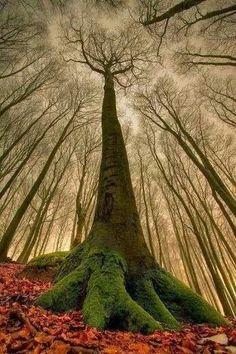 Dark hedges... Northern Ireland