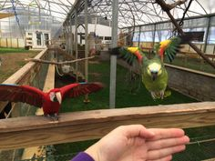 Creative Aviaries and Enclosures Webinar for Parrots and Other Birds