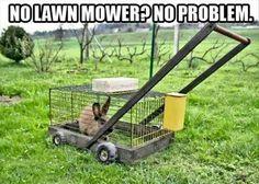 Clever.  I just figured a goat but bunny poop is good fertilizer too.  Hmmmm.
