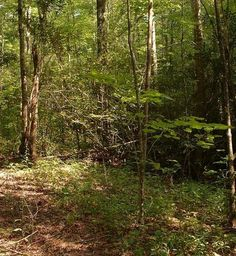 American gensing favorite habitat  http://forestry.about.com/od/alternativeforest/ss/panax_ginseng_4.htm