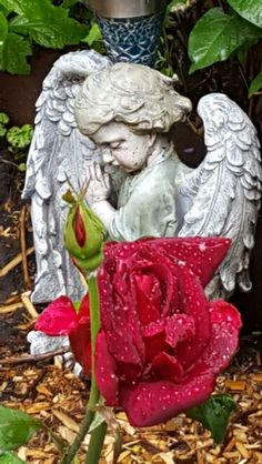 My Garden Angel And A Oklahoma Red