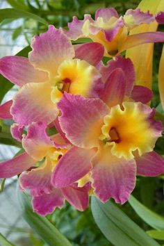exotic flowers names Unusual Flowers, All Flowers, Amazing Flowers, Beautiful Flowers, Orchid Seeds, Orchid Plants, Orchids, Tropical Flowers, Motifs Art Nouveau