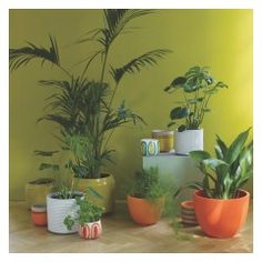 DIPPY Orange dipped ceramic plant pot 12 x Cool Plants, Potted Plants, Outdoor Planters, Planter Pots, Fiberglass Planters, Ceramic Plant Pots, Patio Wall, Truro, Wall Colors