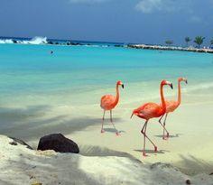 flamingos :)