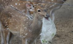 Plastic is endangering million of land animals every single year, and it's up to us to stop this!