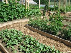 Lazy Vegetable Gardening-Perennial Plants for your Herb, Fruit and Veggie Garden for Zones 4-7