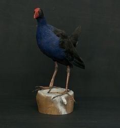 Pukeko - Vintage Industries