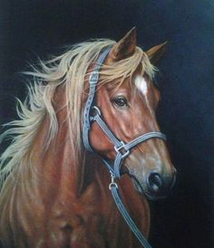 Star Most Beautiful Horses, Pretty Horses, Animals Beautiful, Horse Photos, Horse Pictures, Scratchboard Art, Horse Artwork, Horse Portrait, Pencil Portrait