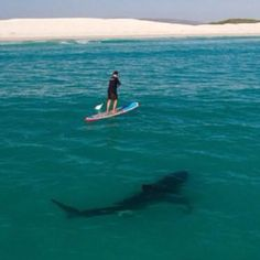 Stand up paddle boarding! How is your balance? #standuppaddleboarsing #shark