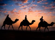 Sunset...Camels...Stunning