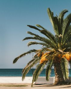 A lonely palm in Greece Beach Day, Lonely, Greece, Palm, Around The Worlds, Photo And Video, Water, Plants, Photography