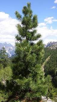 Ask.com Mountains, Nature, Plants, Travel, Naturaleza, Viajes, Destinations, Plant, Traveling