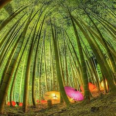 Bamboo Forrest, Kyoto - Japan. Photo by @Ui_Hii618Love