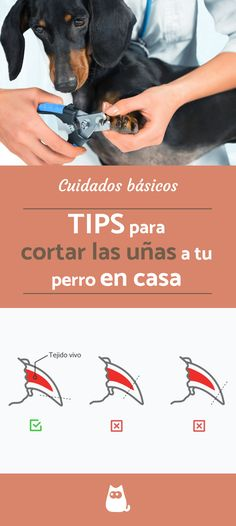 How to cut a dog& nails at home? - Discover all our tips to learn how to cut your dog& nails without leaving home! Animals And Pets, Funny Animals, Dwarf Bunnies, Dog Nails, Pet News, Police Dogs, Dog Costumes, Pet Life, Love Pet