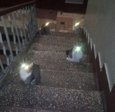 The smudge on the camera lens and the four cats on the stairs came together nicely