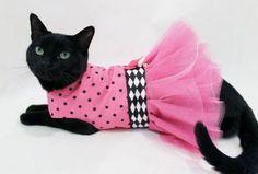Moda para animais – roupas para gatos  llllll