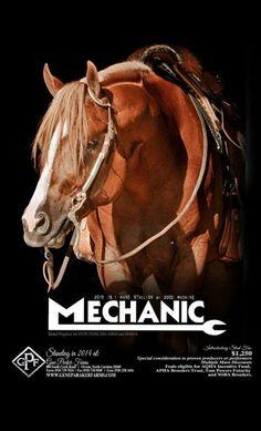 Mechanic 2010 AQHA stallion